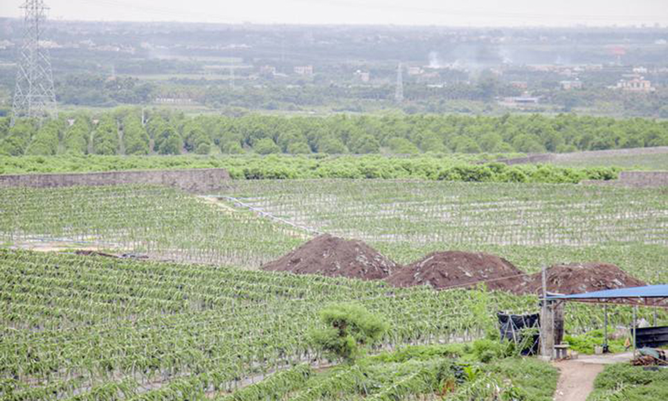 生物有机肥厂家生产