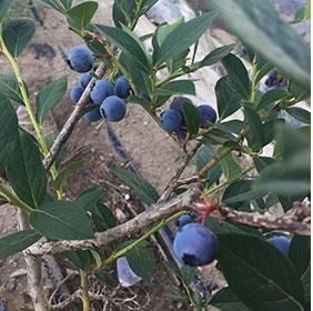 植物有机硅钾肥条件