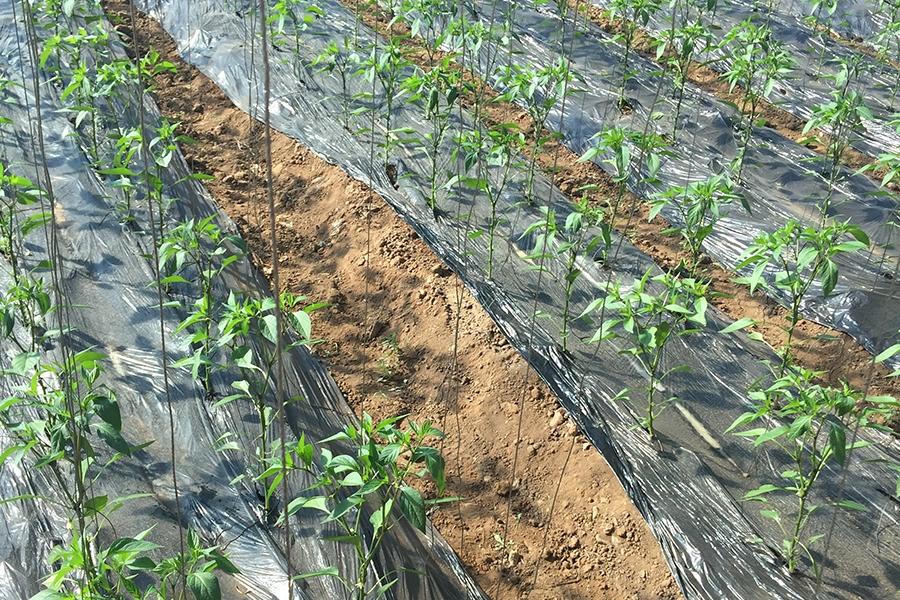 生物有机肥厂家设备